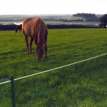 Horse in field behind electric tape fencing