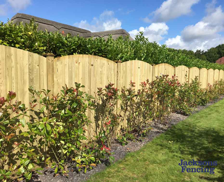 Convex wooden fencing along hedge in back garden