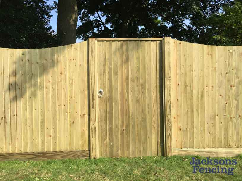 Featherboard fence panels and gate in garden